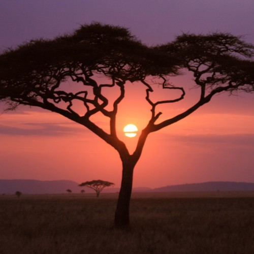 Africa at Sunset