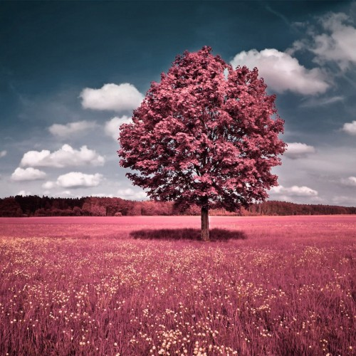 Pink Tree iPad Wallpaper